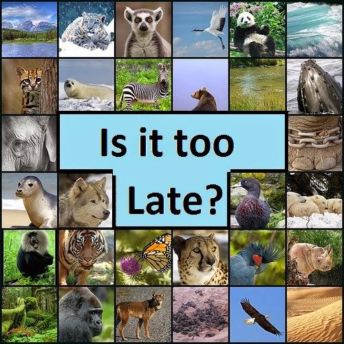 endangered-animals-collage